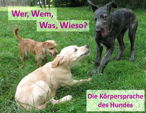 Körpersprache Des Hundes Arbeitsblatt : Seminare und workshops im rhein main gebiet hundeschule